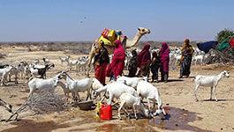Symbolbild: Menschen mit Ziegenherde in Somalia