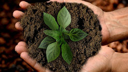 Hände halten Pflanze mit Erde