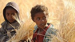 Zwei kleine Jungen in einem Getreidefeld
