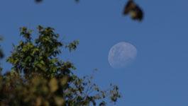 Aufgehender Mond zwischen Baumästen