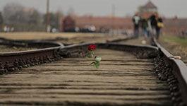Rote Rose auf den Gleisen vor dem KZ Auschwitz