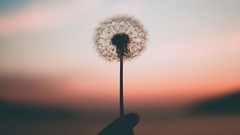 Eine Pusteblume von einer Hand gehalten